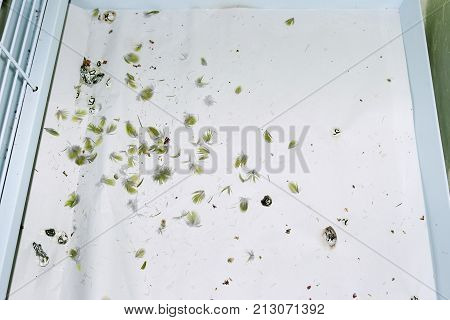 Parrot feathers on the floor of a cage from a parrot with feather damaging behaviour. The feathers have been snipped off by the parrot quickly in succession. A stress reaction called barbering.