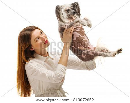 A cute young brunette girl is holding a funny Chinese Crested dog on her hands and tosses it up. Isolated on white background. Indoors.