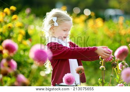 Cute Little Girl Playing In Blossoming Dahlia Field. Child Picking Fresh Flowers In Dahlia Meadow On