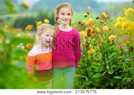 Two cute sisters playing in blossoming dahlia field. Children picking fresh flowers in dahlia meadow on sunny summer day. Kids choosing flowers for their mother.