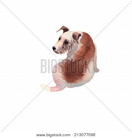JackRussel terier dog puppy hand drawing watercolor illustration