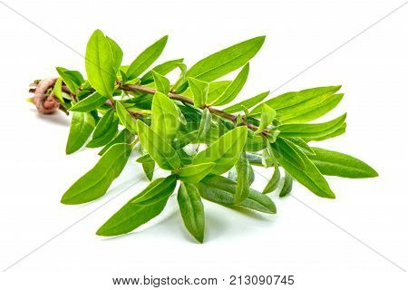 Sprig Of Thyme, Isolated On White Background