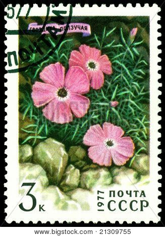 Vintage  Postage Stamp.  Dianthus Repena.