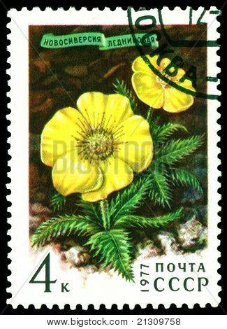Vintage  Postage Stamp.  Novosieversia Glactalis.