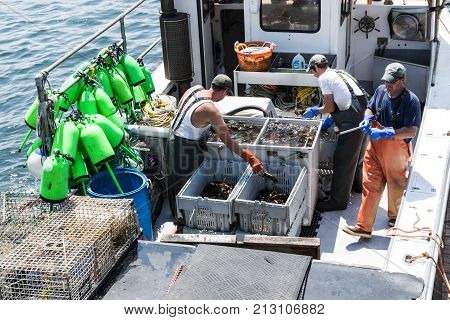 Vinalhaven Maine USA - 4 August 2017: Lobster men keeping Maine's lobster industry alive sorting live lobsters to be sold at the docks at the end of their work day in Vinalhaven Island Maine.