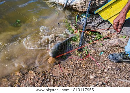 CHONBURI THAILAND - AUGUST 10: Fisherman catching a fish in Bang Phra reservoir a popular spot for locals to fish on August 10 2017 in Chonburi