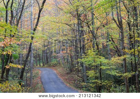 Roadway In Great Smoky Mountains In Fall, Horizontal Aspect