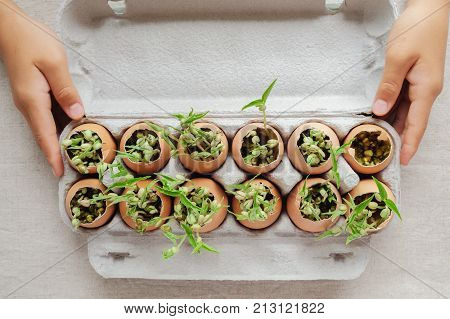 hands holding seedling plants in eggshells eco gardening montessori education concept