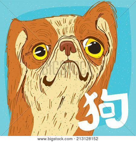 Funny Portrait Of Pekingese Or Peking Lion Dog
