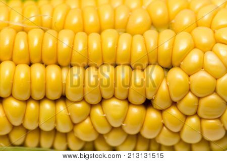 yellow corn kernels in the cob as a background .