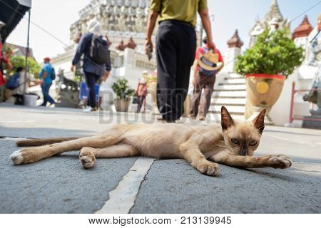 Street cat in temple lick lick its body to clean itself and relaxing in the morning. Down view
