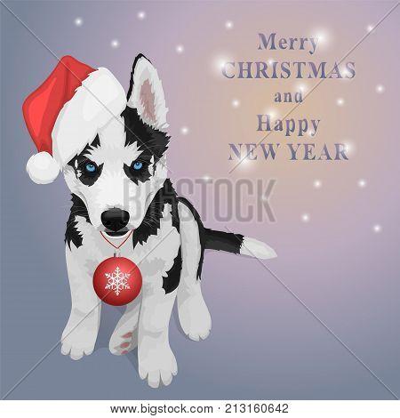 Christmas Husky Puppy
