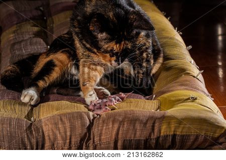 .a Cat With Baby Rats