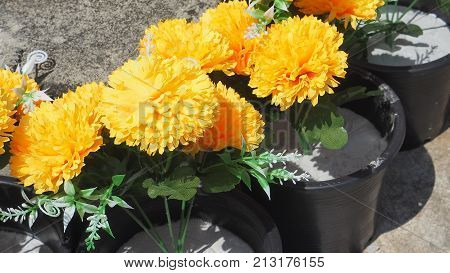 Marigolds flowers plastic in black pot are mimic from the nature Thai Rama 9 symbol.