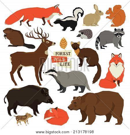 Forest Wild Life Isolated animals big set