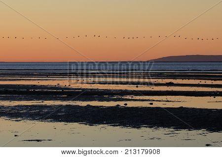 Pelicans boat at sunset in the bay of the San Ignacio Lagoon, Baja California, Mexico, North America