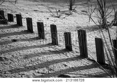 Tips of a buried sand fence casting shadows