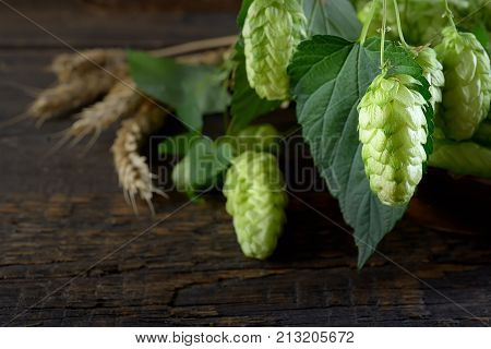 Hops twig over old wooden table background. Vintage style. Fresh-picked whole hops close-up.