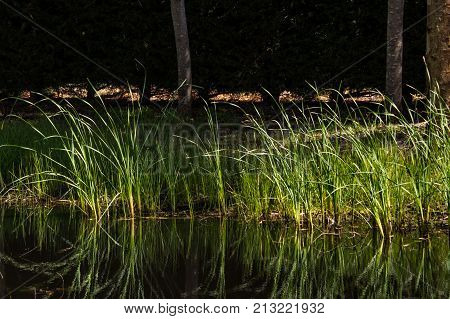 grass and its relections in water edge