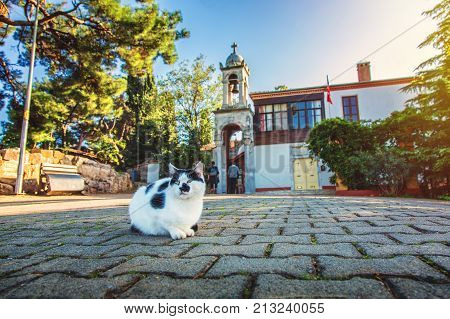 The monastery of St. George or Aya Yorgi Church on Buyukada which is the biggest island of the Princes' Islands near Istanbul and sitting cat in front of it