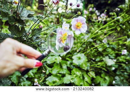 Close Up Of Grass Under Magnifying Glass