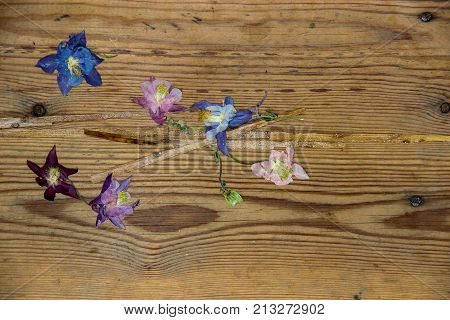 floral composition with dried wilted Aquilegia flowers on old dark wooden table background poster