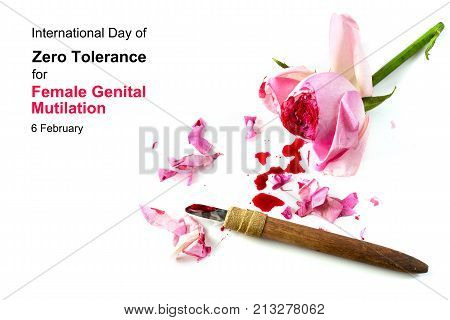 cut rose blossom blood and knife isolated on a white background with text International Day of Zero Tolerance for Female Genital Mutilation 6 February concept for human rights