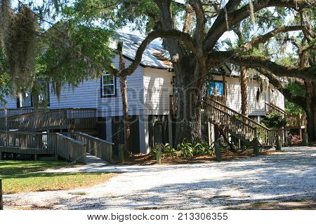 Old South Architecture with live oak trees with Spanish moss  hanging from branches