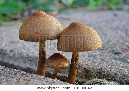 The Mushroom Family out for a New England walk.