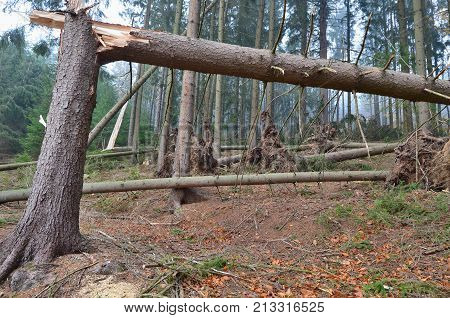 forest damaged by wind southern Bohemia Czech Republic