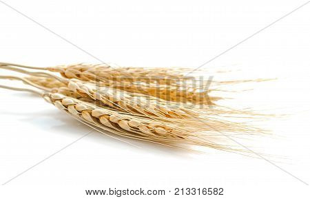 pearls barley grain seed on background .