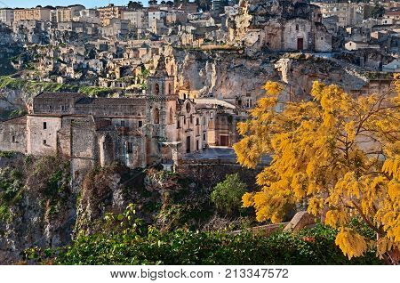 Matera, Basilicata, Italy: landscape at sunrise of the old town with the church of Saints Peter and Paul (know also as San Pietro Caveoso) and a mimosa tree in the foreground
