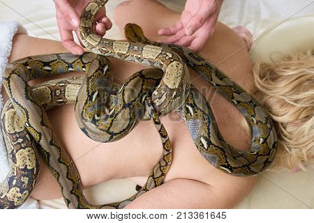 Snakes on female naked back. Exotic therapy with snakes massage for treatment of nervous problems. Treatment of migraine with animal therapy. Health recovering with snakes massage.
