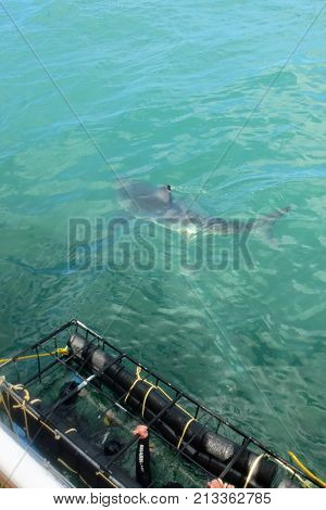 Close Encounter With Great White Shark From Boat While Cage Diving