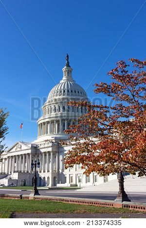 The United States Capitol dome in autumn Washington DC USA. Colorful deciduous trees in front of majestic US Capitol building.