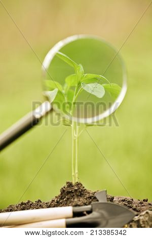 Young plant and agricultural implements against spring natural background. Ecology concept