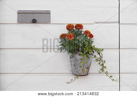 Flower pot hanging on a white wooden wall with mailbox