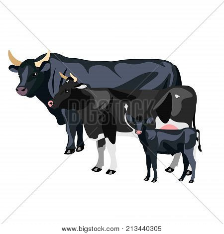 Cow Calf and Bull isolated. Vector illustration