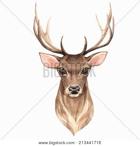 Noble deer, isolated on white background. Watercolor illustration