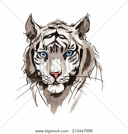 Exotic tiger wild animal in a watercolor style isolated. Full name of the animal: tiger. Aquarelle wild animal for background, texture, wrapper pattern or tattoo. poster