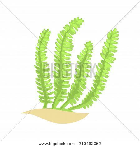 Bright green feather alga. Tropical aquatic plant. Underwater invertebrate organism. Marine ecosystem. Sea and ocean life concept. Isolated coral icon. Cartoon vector illustration in flat design.