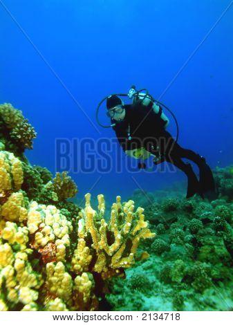 Scuba Diver And Coral Head In Maui, Hawaii