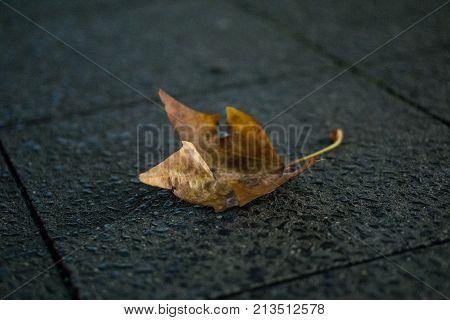 Blatt auf Bürgersteig im Herbst bei Nacht