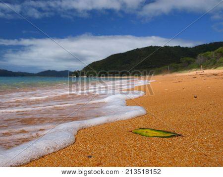 Foam On Totaranui Beach Abel Tasman Np