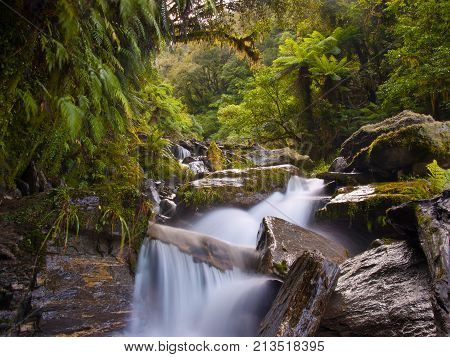 Temperate Rainforest Waterfall