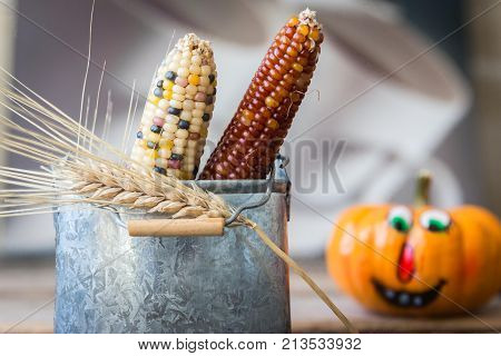 image of a Little tin can with two different coloured corn on the cob in it with a stalk of wheat and a blurred pumpkin in the background great for autumn season.