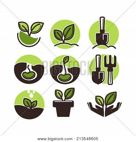 Gardening and planting icons set of flower plants growth stage process and gardener tools. Vector symbols of growing tree seed and green sprout, garden spade and rake for planting horticulture