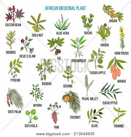African medicinal plants. Hand drawn vector set of medicinal plants