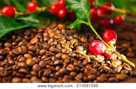 Coffee background. Real coffee Plant on roasted coffee. Border art design with Red beans on a branch of coffee tree with ripe fruits. Harvest. Roasted beans closeup. Space for your text