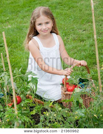 Vegetable garden - little gardener with harvests of organic vegetables